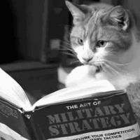 strategy cat