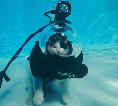 underwater cat explorer