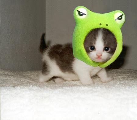 Angry Frog, Cute Kitty - pichars.org