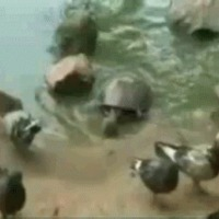 turtles not so slow
