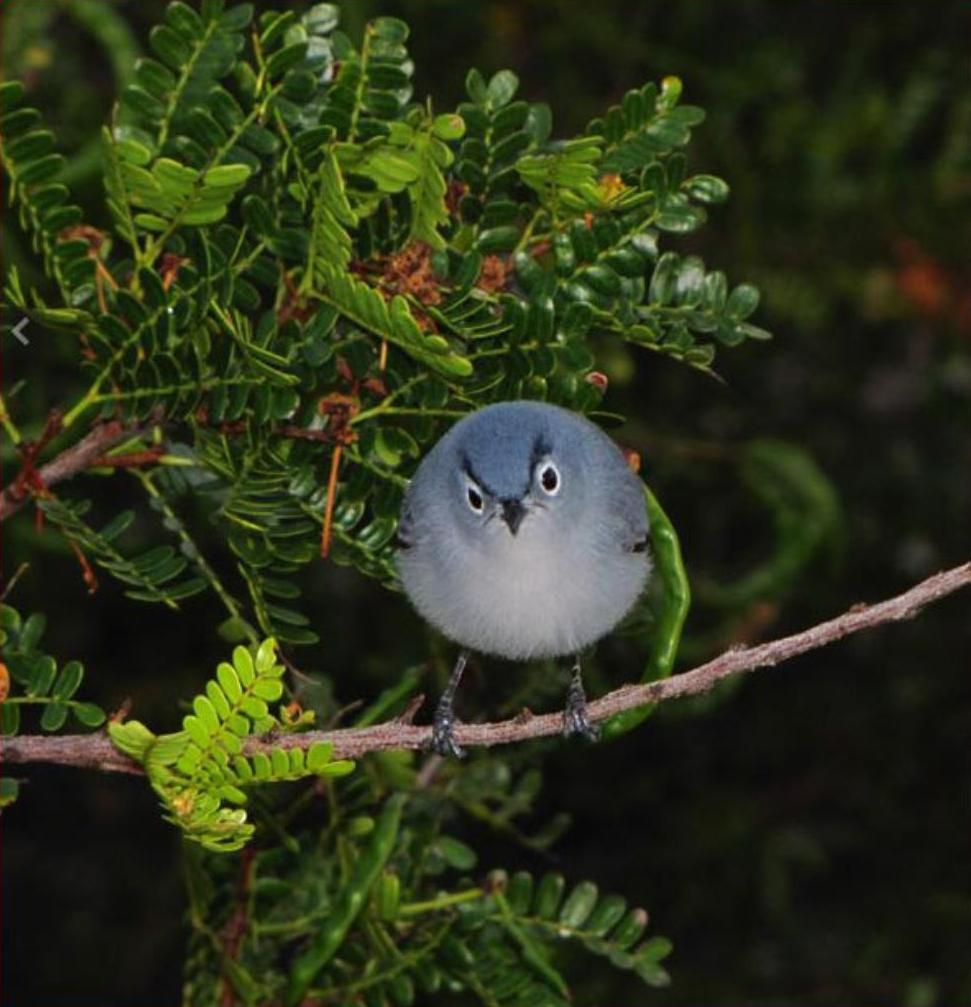 angry bird - pichars.org
