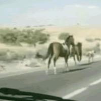 horse vs car