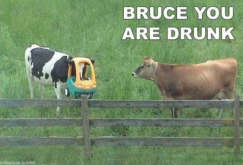 BRUCE YOU ARE DRUNK - pichars.org