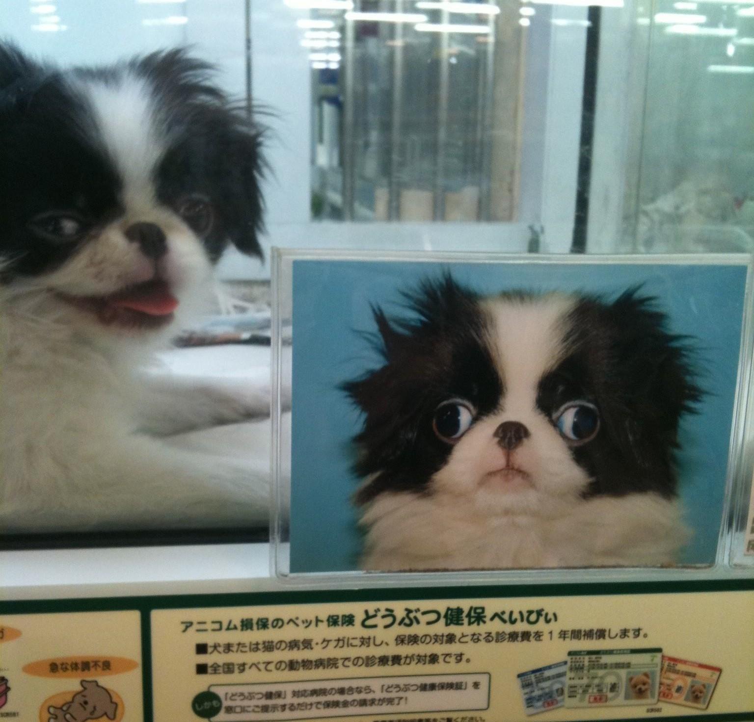 me gusta puppy - pichars.org
