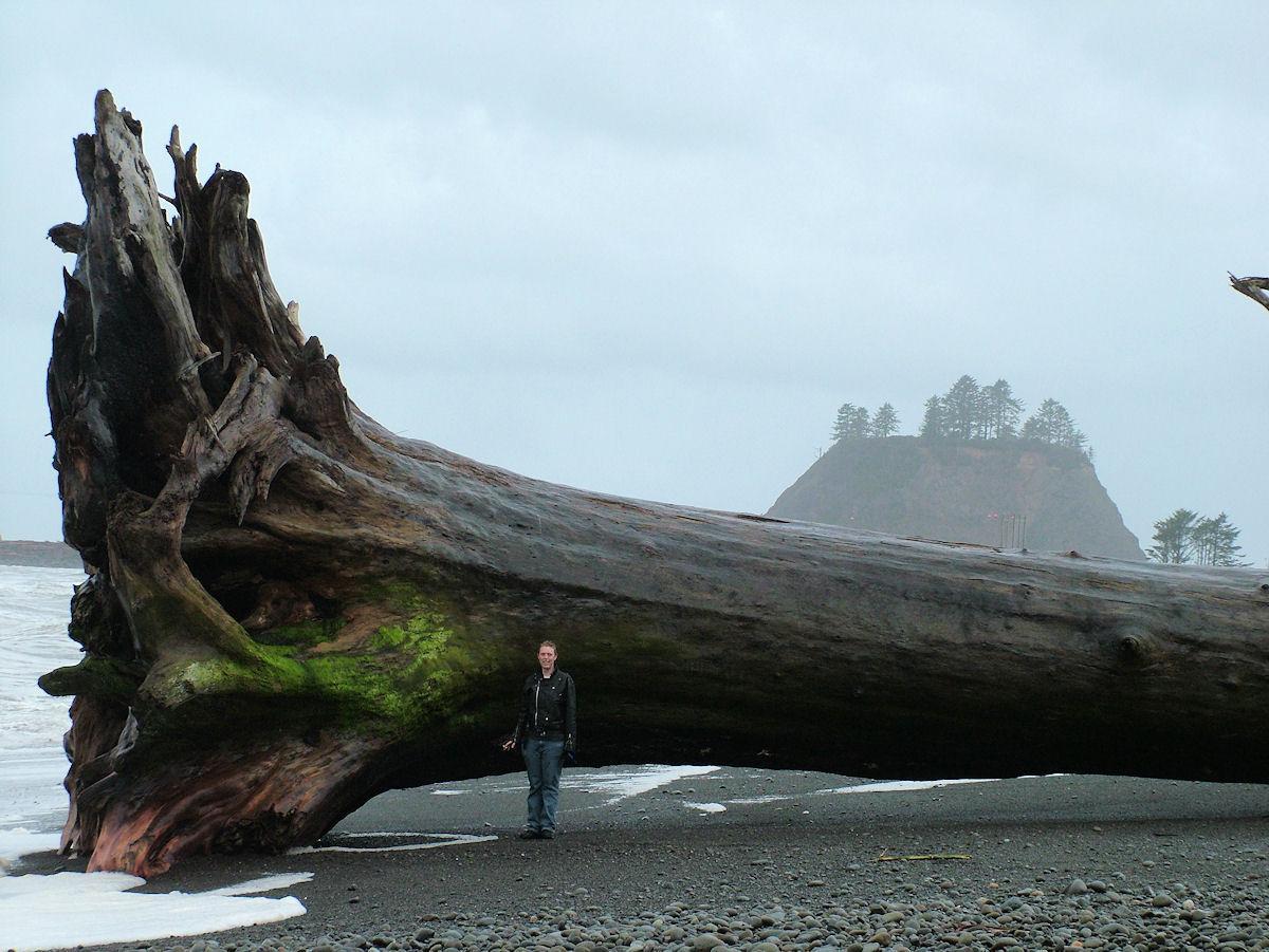 adrift sequoia - pichars.org