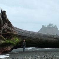adrift sequoia
