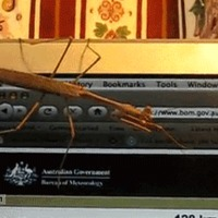 stick bug trolled