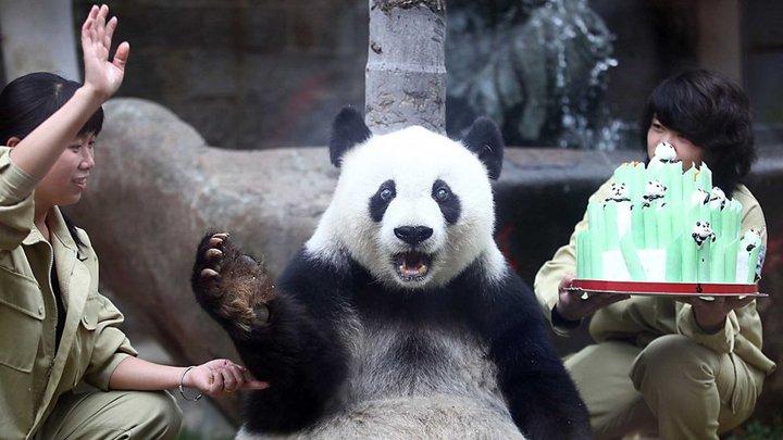 panda birthday - pichars.org