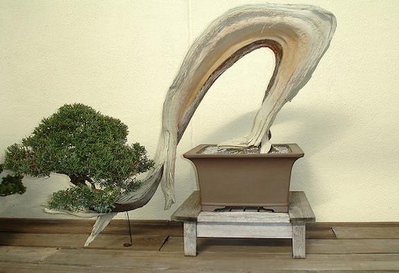 nice bonsai