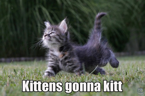 kittens gonna kit