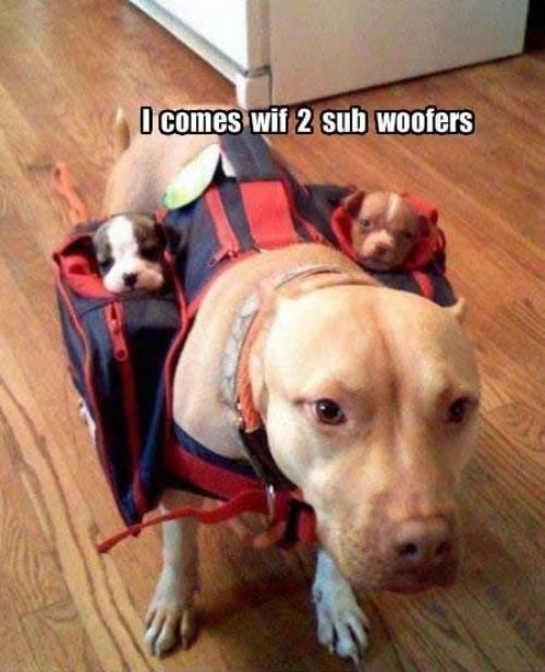 i comes with two sub woofers - pichars.org