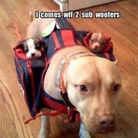 i comes with two sub woofers