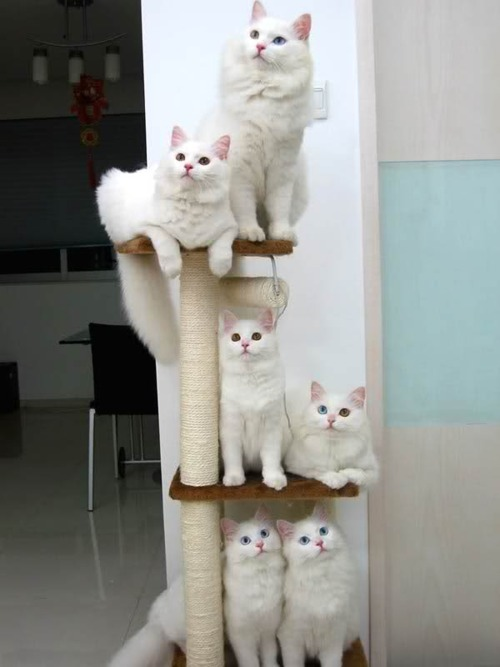 cat tower is full