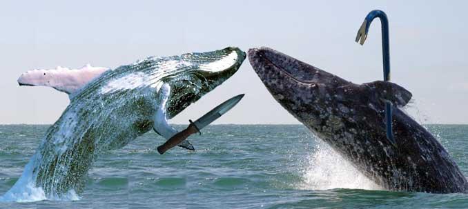 whale wars - pichars.org