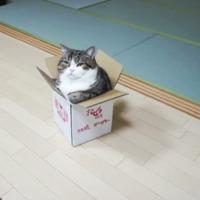 maru in box