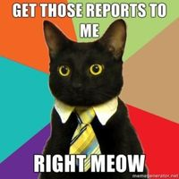 business cat needs reports