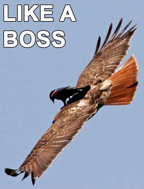 like a boss - pichars.org