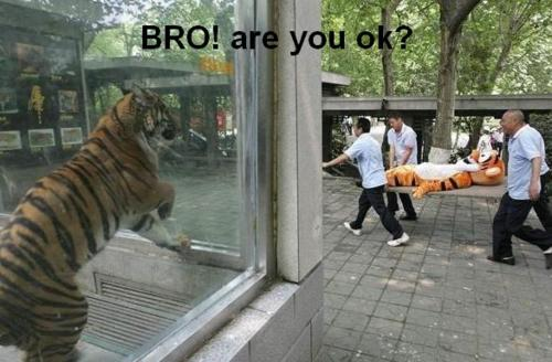 bro are you alright? - pichars.org