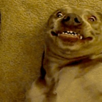 ridiculous smiling dog