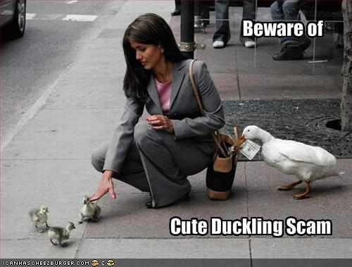 beware of cute duckling scam - pichars.org