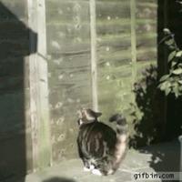 parkour cat needs no gravity