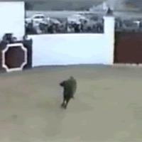 bull fake