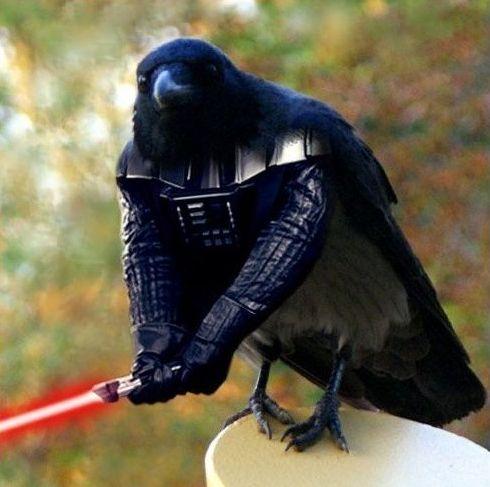 vader bird - pichars.org