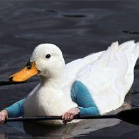bird with human arms paddles