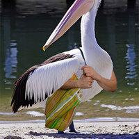 bird with human arms purse