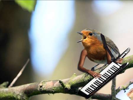 bird with human arms keyboard