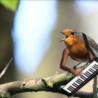 bird with human arms keyboard