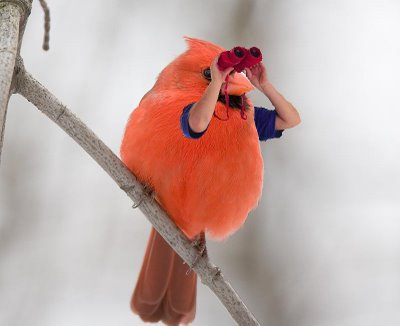 bird with human arms binoculars