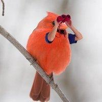 bird with human arms binoculars