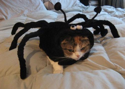 spiderkittay