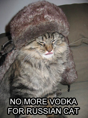 russian cat - pichars.org