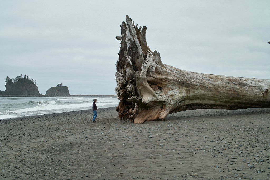 some driftwood - pichars.org
