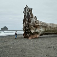 some driftwood