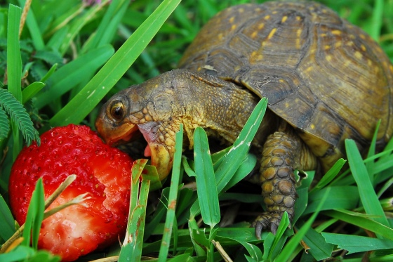 turtle ates - pichars.org