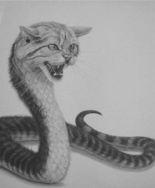 catsnake - pichars.org