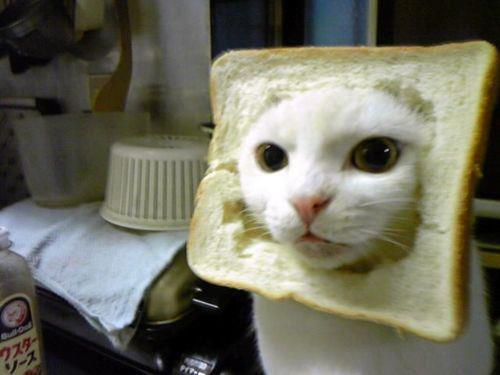 Please spay or neuter your pets! This is a tragic example of an in-bread cat!