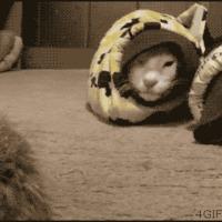 serpent cat