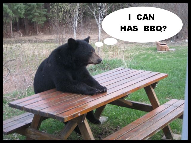 i can has bbq - pichars.org