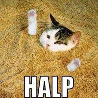 cat in sand