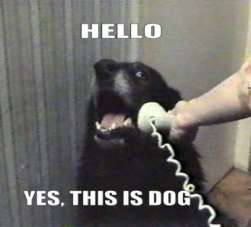 hello this is dog