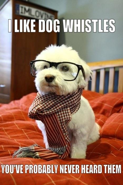 hipster dog likes dog whistles