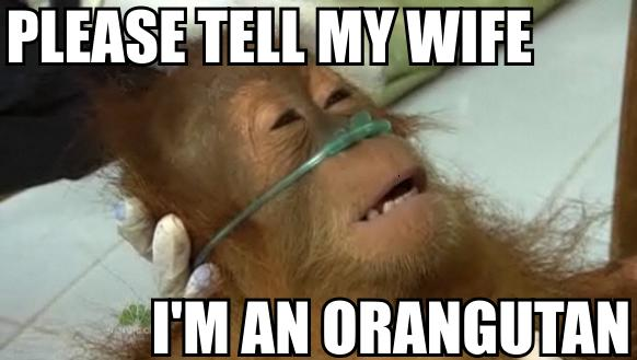 please tell my wife that i am an orangutan  - pichars.org