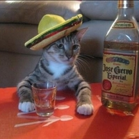 cat likes tequila