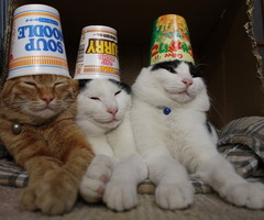 cat party - pichars.org
