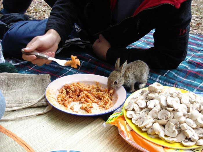 tiny rabbit food
