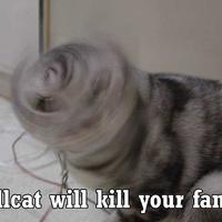 drill cat